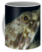 Mouth Of A Variegated Lizardfish, Papua Coffee Mug