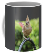 Mrs Cardinal Coffee Mug by Carol Groenen