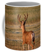 Mule Deer Buck In An Alberta Field Coffee Mug