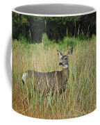 Mule Deer Winthrop Wa 9176 Coffee Mug