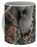 Mulie Buck 5 Coffee Mug