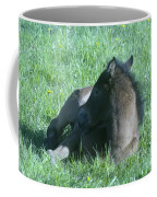 Napping Colt Coffee Mug