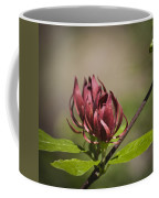 Native Sweetshrub Coffee Mug