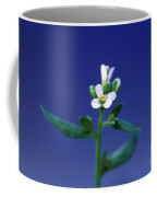 Normal Arabidopsis Plant Coffee Mug