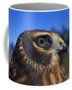Northern Harrier Raptor In Profile Coffee Mug