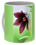Northern Rice Root Fritillaria Coffee Mug
