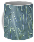 Nostoc Algae Coffee Mug by M. I. Walker
