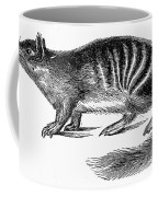 Numbat Coffee Mug