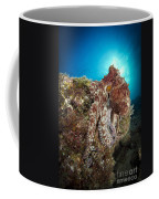 Octopus Posing On Reef, La Paz, Mexico Coffee Mug