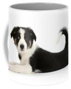 Odd-eyed Border Collie Pup Coffee Mug