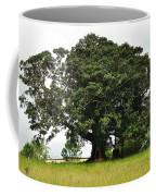Old Fig Tree - Ficus Carica Coffee Mug by Kaye Menner