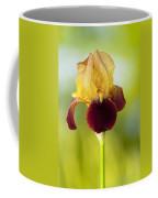 Old Time Two Toned Burgundy And Gold Iris Coffee Mug