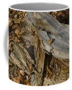 Old Tree Trunks And Leaves Decaying Coffee Mug