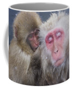 Older Snow Monkey Being Groomed By A Coffee Mug