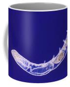 Oligochaete Worm Coffee Mug