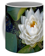 Optical Illusion In A Waterlily Coffee Mug by Kaye Menner