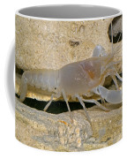 Orange Lake Cave Crayfish Coffee Mug