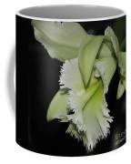 orchid 900 Brassolaeliocattleya Ruben's Verde Chantilly Green Coffee Mug