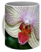 Orchid Close Up Coffee Mug