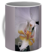 Orchid Close Up Two Coffee Mug