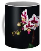 Orchid Flowers Against Black Background Coffee Mug