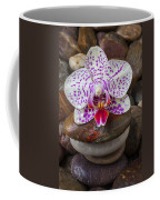 Orchid On Stack Of Rocks Coffee Mug