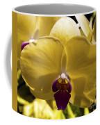 Orchid Study Vi Coffee Mug