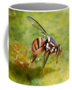 Oriental Fruit Fly Laying Eggs Coffee Mug