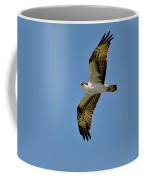 Osprey Above Coffee Mug