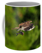 Osprey Inflight At Blue Cypress Lake Coffee Mug