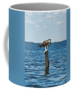 Osprey With Catch. Coffee Mug