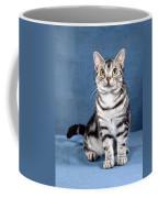 Outstanding American Shorthair Cat Coffee Mug