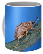 Oxyops Vitiosa Leaf Weevil On Melaleuca Coffee Mug