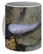 Ozark Blind Cavefish Coffee Mug