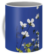 Pacific Dogwood Blossoms Cornus Coffee Mug