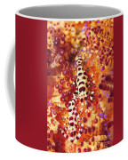 Pair Of Coleman Shrimp On A Red Coffee Mug