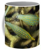 Pair Of Comet Fish, Australia Coffee Mug by Todd Winner