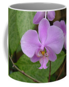 Pale Pink Orchid Coffee Mug