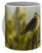 Palm Warbler, Everglades National Park Coffee Mug