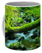 Paradise Of Mossy Logs And Slow Water   Coffee Mug