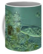 Paramecium Feeding Lm Coffee Mug