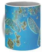 Paramecium Coffee Mug