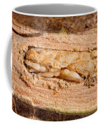 Parasitized Ash Borer Larva Coffee Mug