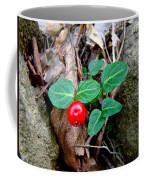 Partridge Berry Berry - Mitchella Repens Coffee Mug