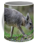 Patagonian Cavy Youngin Coffee Mug