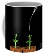 Pea Plants Grown With Gibberellic Acid Coffee Mug