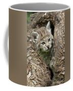 Peeking Out - Bobcat Kitten Coffee Mug