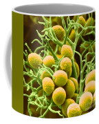 Peronospora Parasitica Coffee Mug