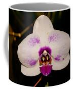 Phalaenopsis White Orchid Coffee Mug