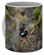 Pigeon Gillemot Mating Coffee Mug